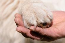 Eine menschliche Hand hält eine Hunde-Pfote