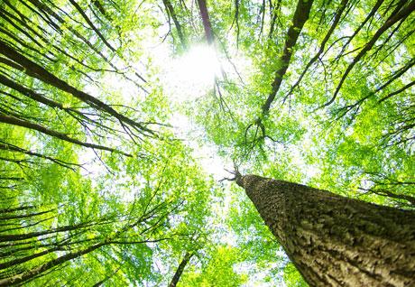 Blick durch Bäume in den Himmel
